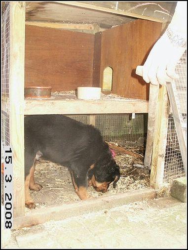 2008-04-08 puppie 0122