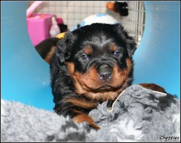 Baby Ace 4 weken