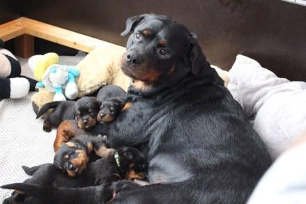 Chess en haar prachtige puppies.