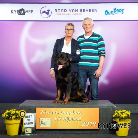 GeeStar BEST OF BREED Hazerswoude