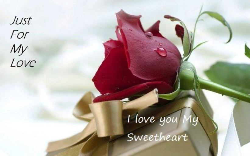 rose-day-pic-rose-day-messages