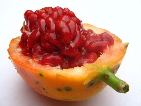 passiflora frutto