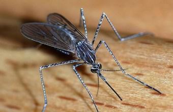 Come difendersi dagli insetti, cosa fare per le punture di insetti