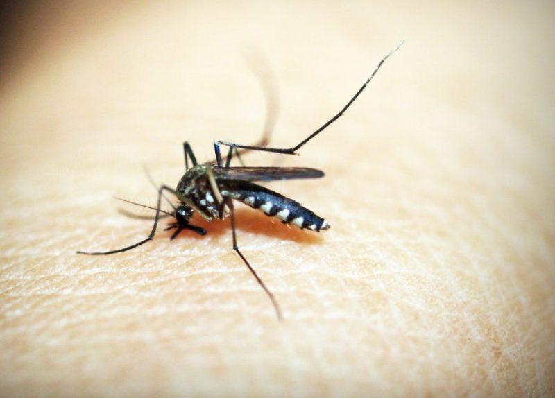 Come difendere i bambini dalle zanzare: consigli e spray antizanzare