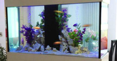 Perché un acquario in casa: dieci buoni motivi
