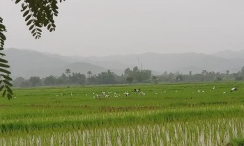 Rice fields with birds biking in Chiang Mai