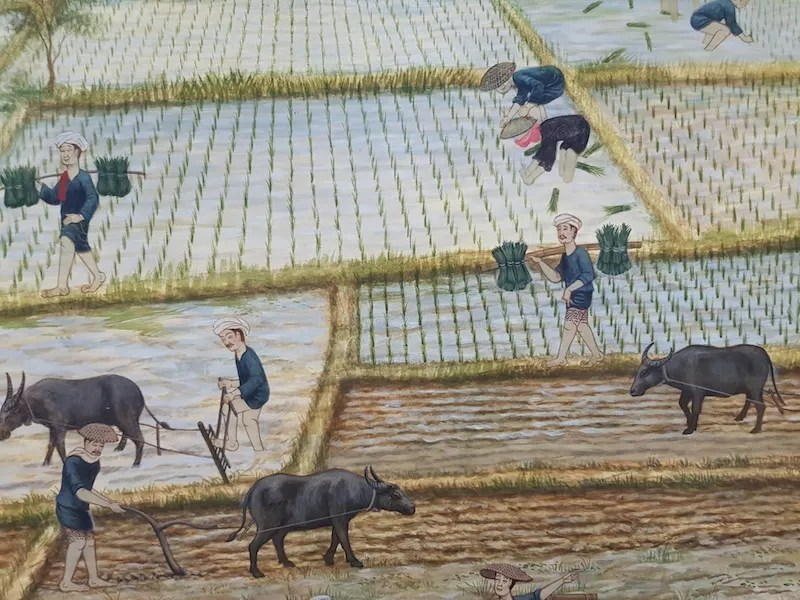 People working in a rice field