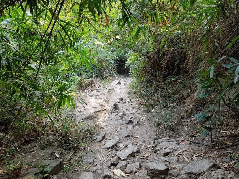 Forest trail with bamboo
