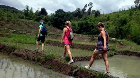 Trekking in the rice fields