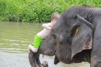 Climbing up an elephant's trunk!