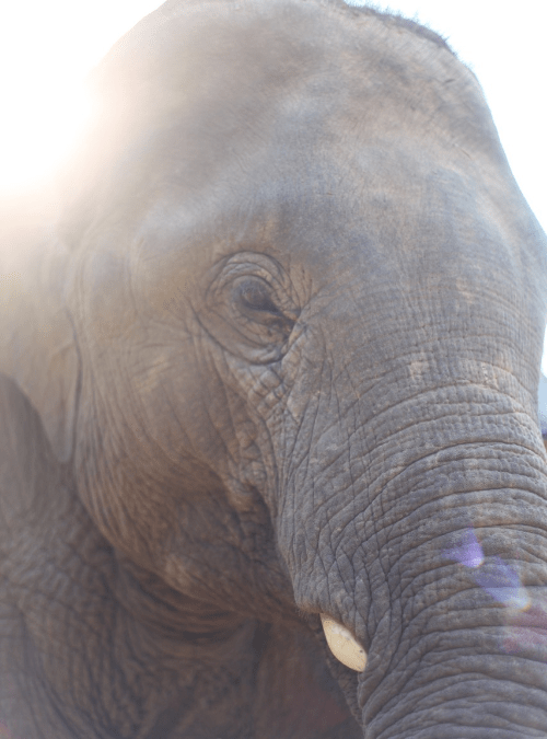 Elephant experience – a blog post from our guests
