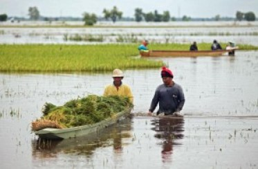 Climate Change and Thai Rice Farmers