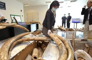 Prime Minister, Yingluck Shinawatra Promises to End Thailand 's Domestic Ivory Trade