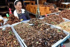 Currently, most edible insects are gathered in forests