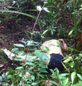 Her body was found along a trail that snaked through the jungle close to the resort