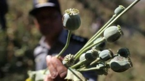 Poppy fields in Burma destroyed to curb opium production