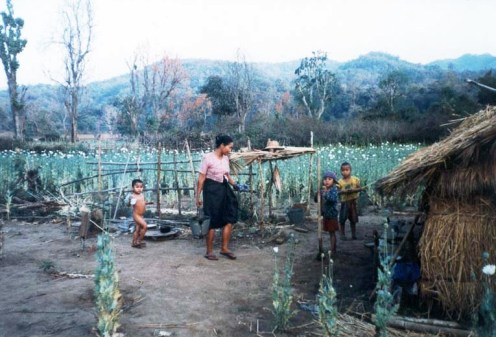 Opium farming family in Northern Shan State