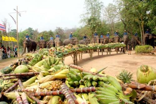 Feast of fruit for the elephants