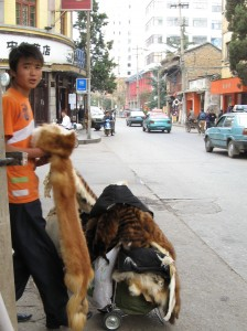 Cendor who is selling dog and cat pelts