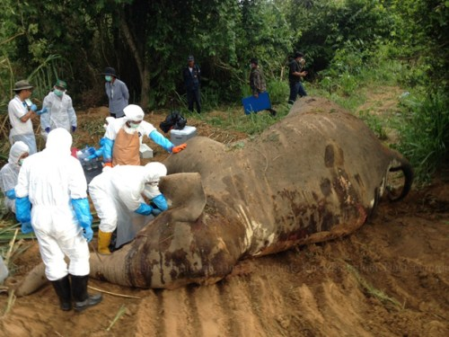 a combined team of national park officials, veterinarians, soldiers and police inspected the carcass of a six-year-old male elephant