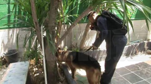 Police Dog brought in to scent area
