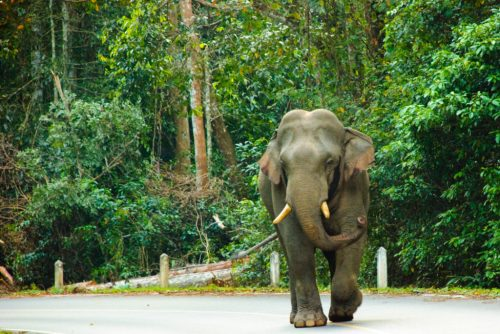 Temple boys told the police that several wild elephants entered the temple area last night as they used to in the past few months looking for food.