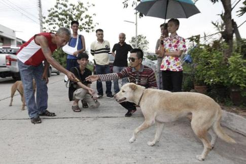 Stray Dog Saves Abandoned Baby in Chon Buri Province