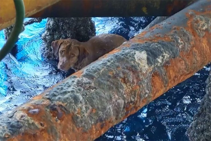 Dog Found Swimming 220 Kilometers Away from Land By Oil Rig Workers, in the Gulf of Thailand