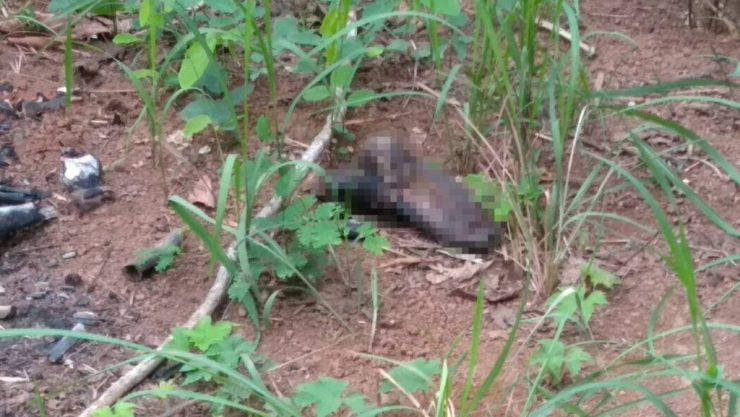 Remains of Burnt Body Found in Forested Area of Chiang Rai's Mae Chan District