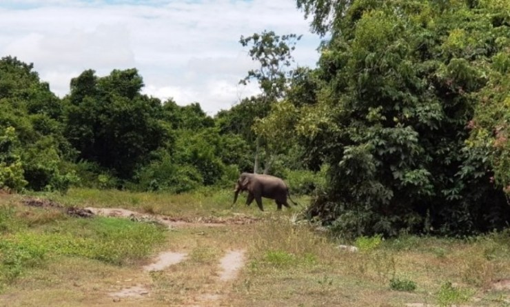 German Cyclist Injured After Elephant Attack in Central Thailand
