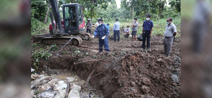 More than 200 Pigs Culled in Chiang Rai Over Fears of Swine Fever