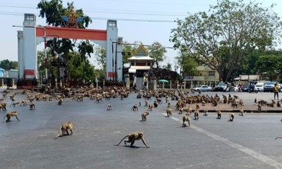 Thai Monkeys
