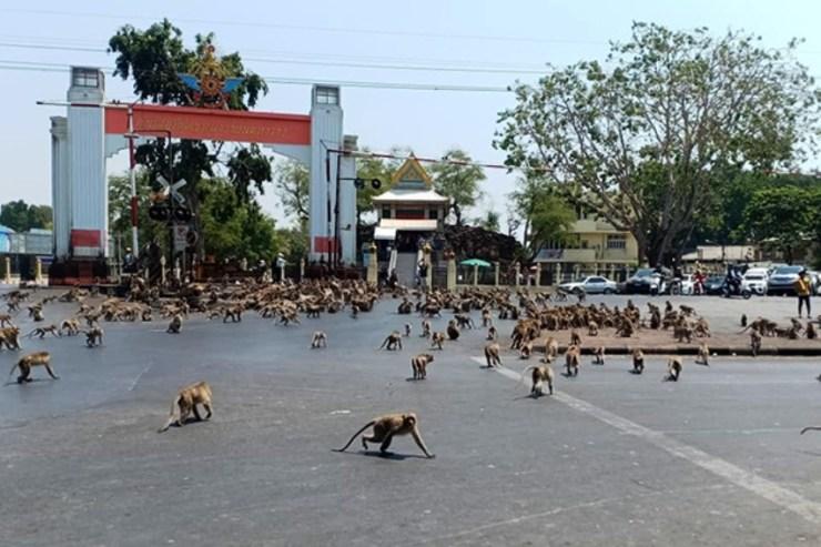 Monkeys, Thailand, Lopburi