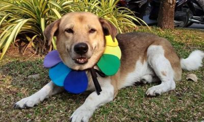 Watchdog Thailand,Policeman ,Torturing and Killing Dog