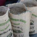 El café chiapaneco tiene calidad de exportación. Foto: Ángeles Mariscal/Chiapas PARALELO