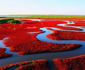 La spiaggia rossa di Panjin
