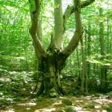 Un drôle d'arbre