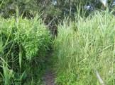 Un sentier autour de l'étang