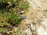 Un papillon solitaire (le pauvre)