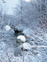 Une rivière coule sous la neige