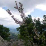 Encore des jolies fleurs
