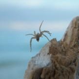 Une araignée volante!