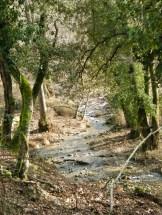 Au départ on longe un ruisseau