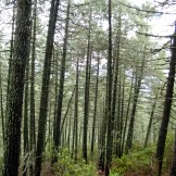 Encore sous les pins