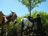 Des cavaliers du ranch d'Albertacce