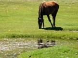 Un cheval qui est venu nous suivre un moment