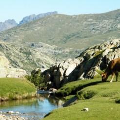 Une vache sur les pozzi sur fond de Paglia Orba