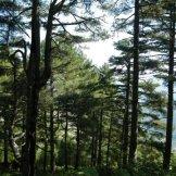 Dans la forêt de pins, ça grimpe