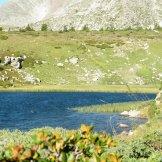 Une plante pousse sur le lac