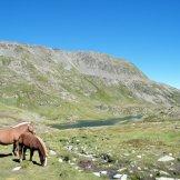 Des chevaux sur le chemin